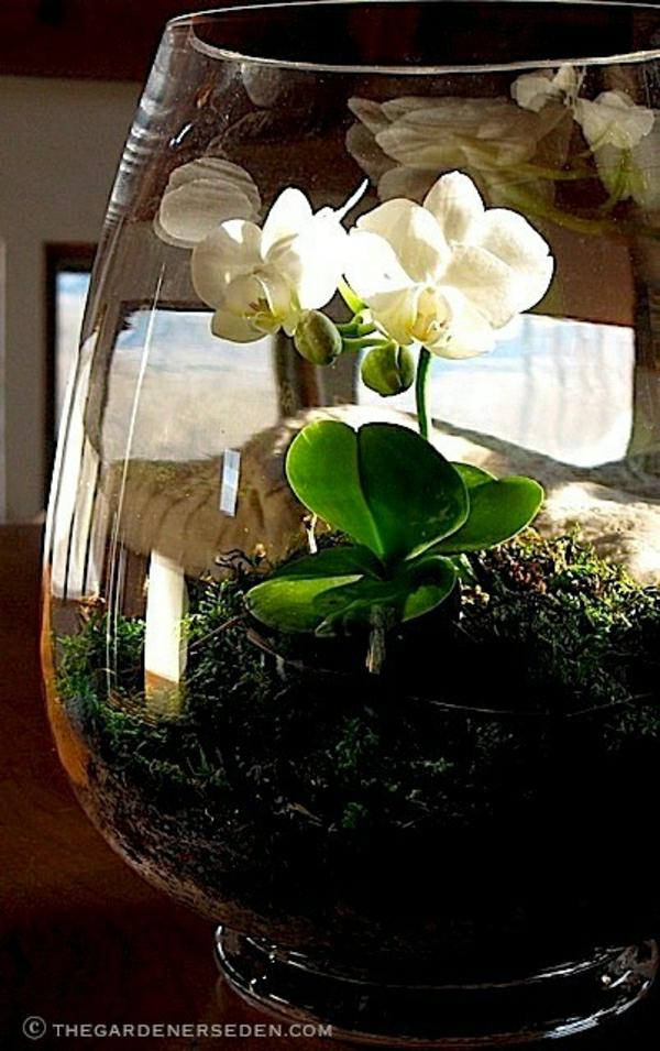 Glasbehälter Blume
