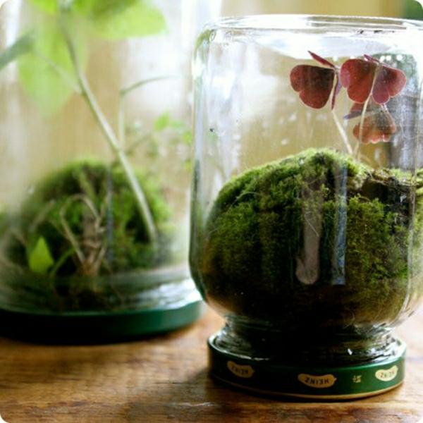 Glasbehälter Schmetterling