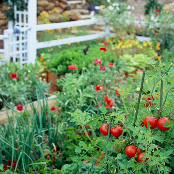 Tomaten-Garten