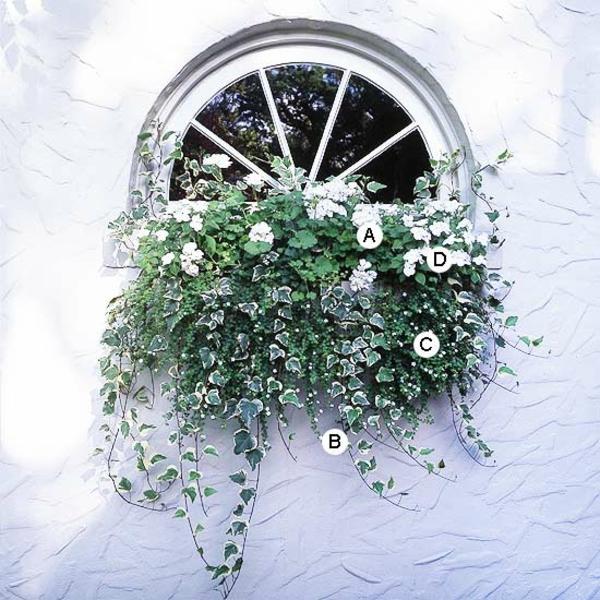 Ideen für Fenster Blumenkasten - Originelle Vorstellungen
