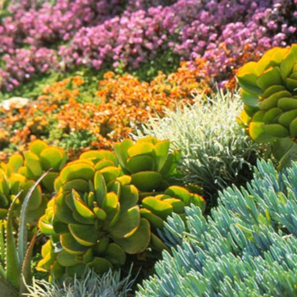 Garten Landschaft Xeriscaping Blumen