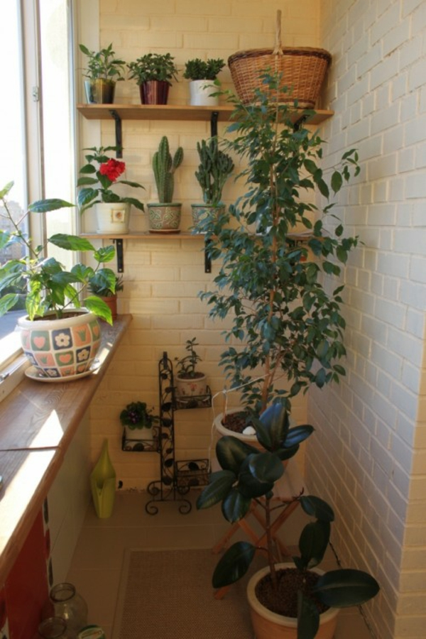 kleinen-Balkon-pflanze