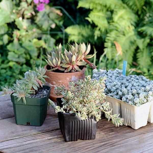 Gartengestaltung pflanzen sie einen lebendigen Kranz