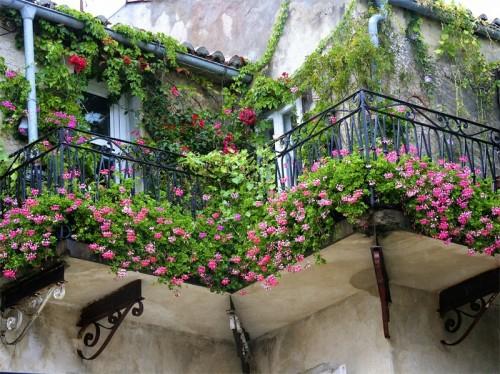blumen blüten idee originell frisch balkon schatten gemütlich