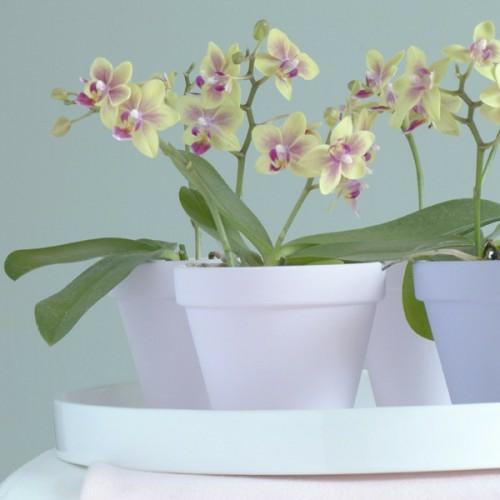 blumentopf hell frisch orchideen grn bltter dekoration - Gestaltungsideen Durch Orchiden