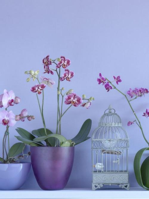 orchideen deko ideen lila farben blumentopf vogelkfig - Gestaltungsideen Durch Orchiden