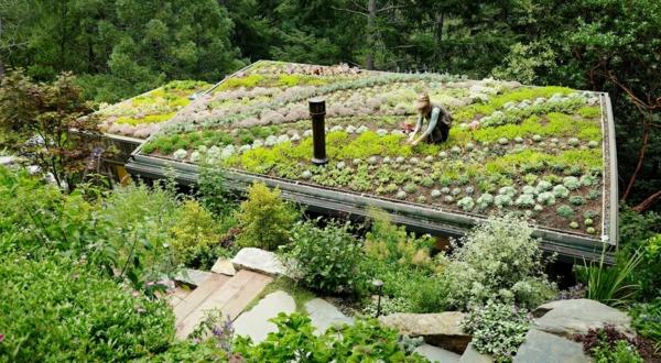 dachgarten sukkulenten gartenpflanzen gartenbau seinplatten natursteine