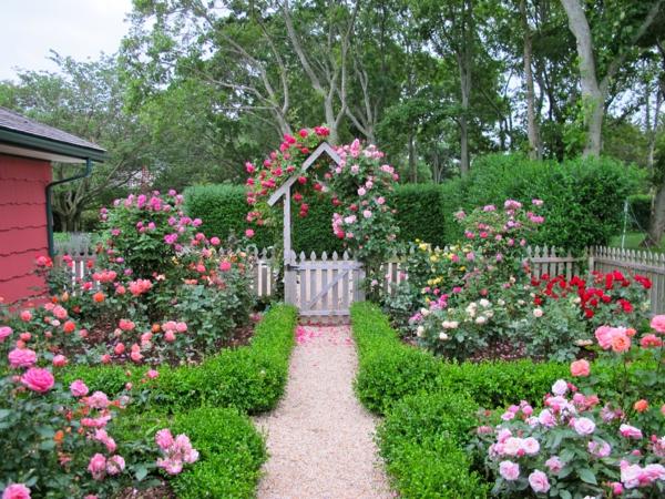gartengestaltung garten ideen gartenzaun rosenstrauch buchsbaum