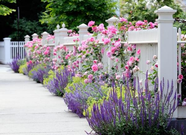 englischer garten lavendel rosen gartenzaun weiß holz