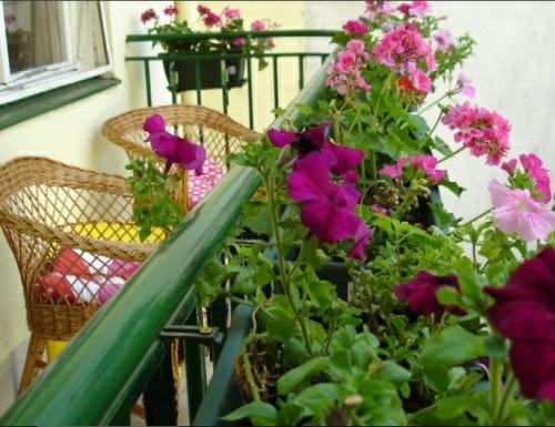 einen gemütlichen Balkon design sitzbank stühle blumen rosa grün exterieur