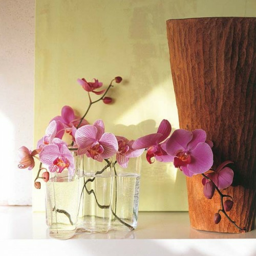 Orchideen Im Schlafzimmer Ungesund – capitalvia.co