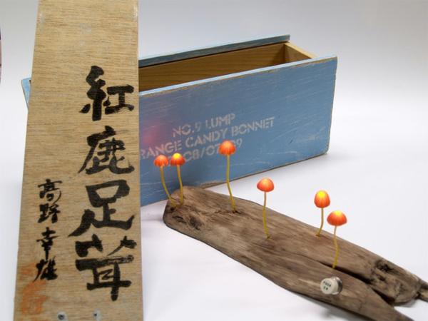 japanisch designer led beleuchtung  dekoration