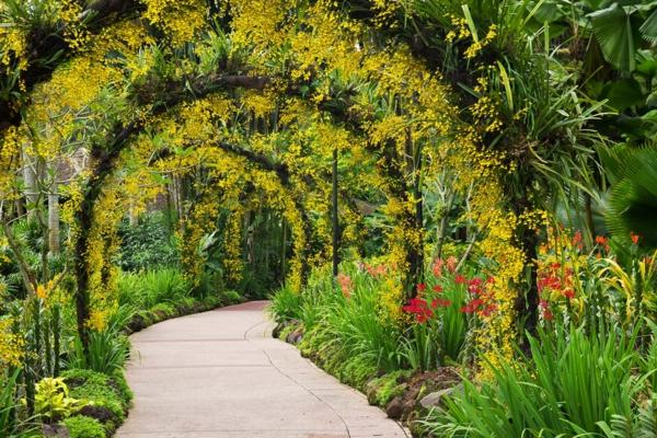 kletterpflanzen arkaden rosenbogen sommerblumen gehweg anlegen