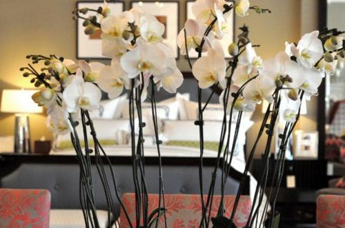 orchideen zimmer deko edel weiß bilder