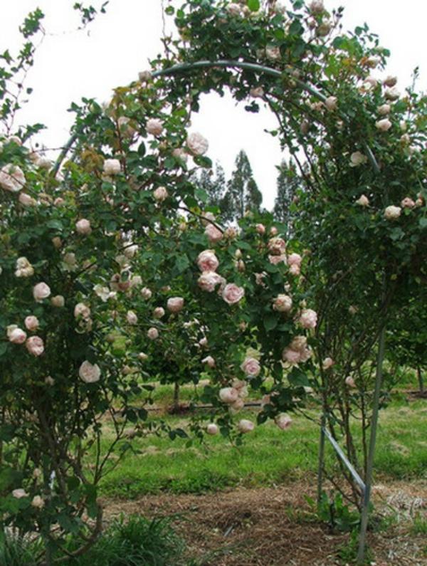blumenbogen metall weiße rosen