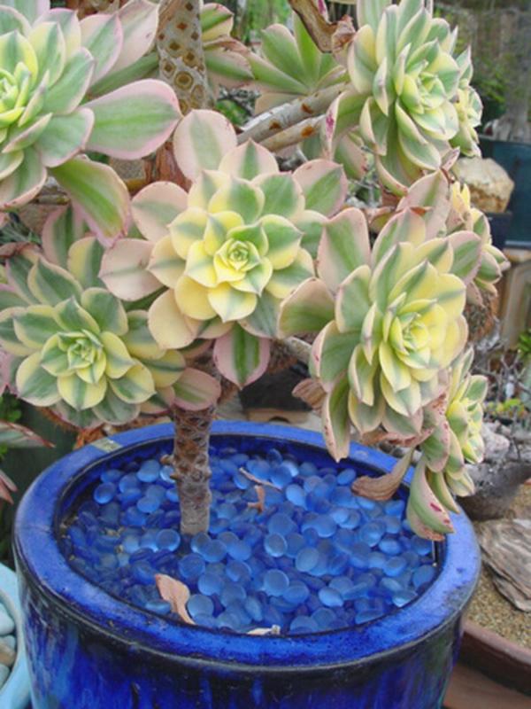 deko ideen für den garten fettpflanze blaue steine