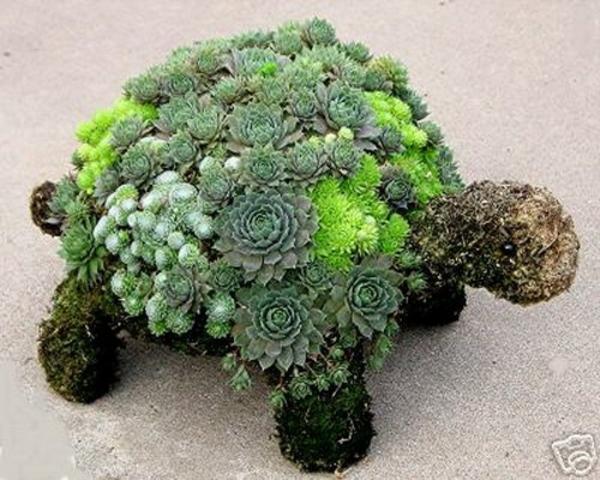 deko ideen für den garten schildkröte steingewächs