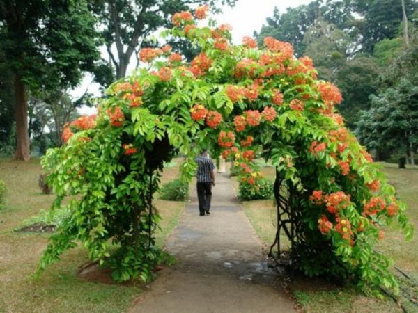 gartenbogen orange blumen deko