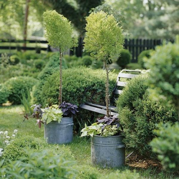grüne pflanzen garten verzierung
