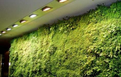 grüne pflanzen wohnung lebendig wand