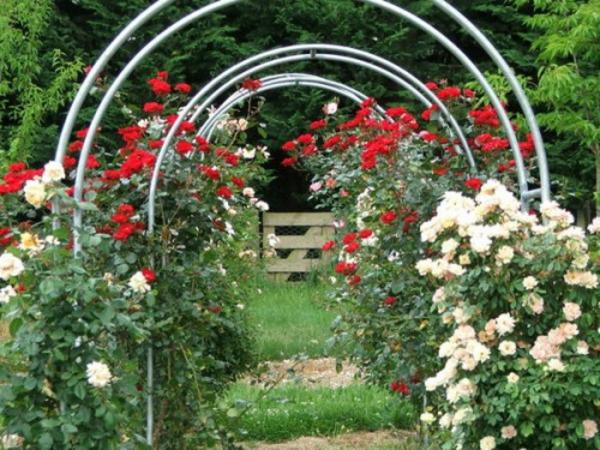metall gartenbögen weiß rot rosen