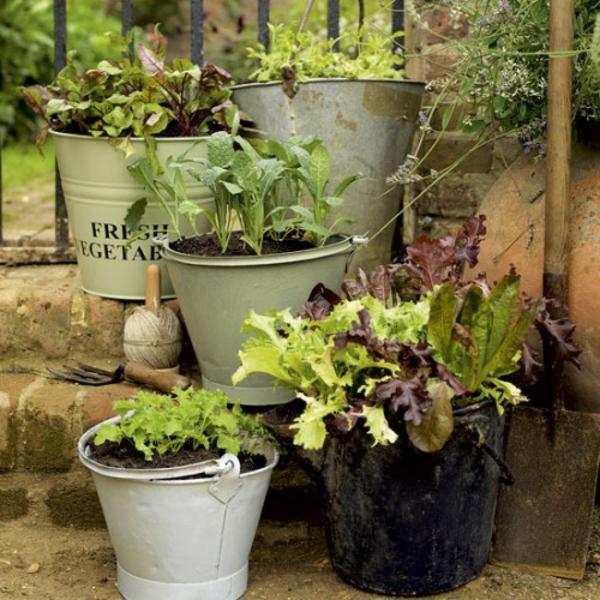 metalleimer grüne pflanzen dekoration