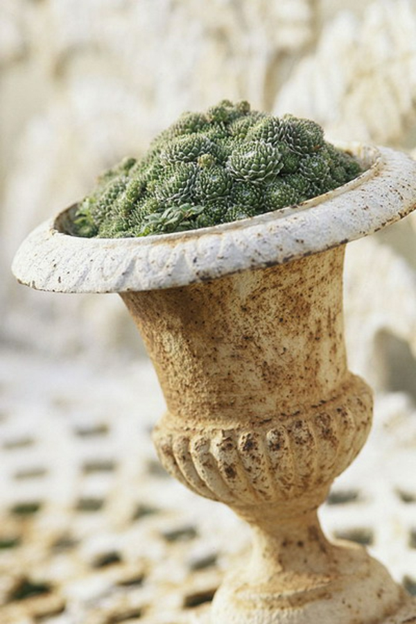 verrostet blumentopf fettpflanzen deko