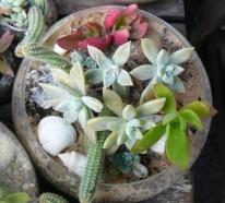 35 wundervolle Deko Ideen für den Garten mit Sukkulenten