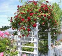 Zauberhafte Rosenbögen im Garten – 21 tolle Vorschläge
