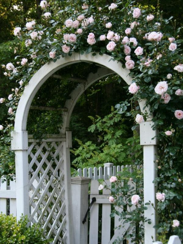 weiß rosenbogen garten tor