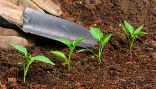 arbeit im garten pflanzen frühling grün frisch pflanzen