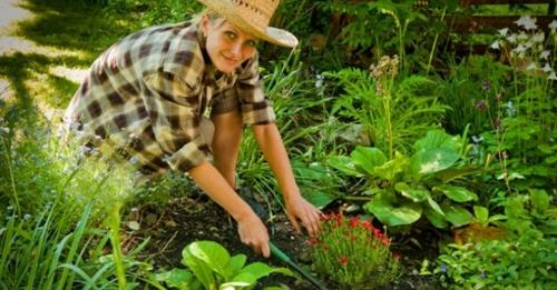 arbeit im garten pflanzen frühling grün frisch