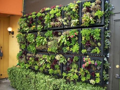 Coole Zimmerpflanzen balkon pflanzen coole platzsparende ideen