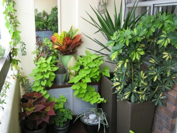 balkon gestalten pflanzen