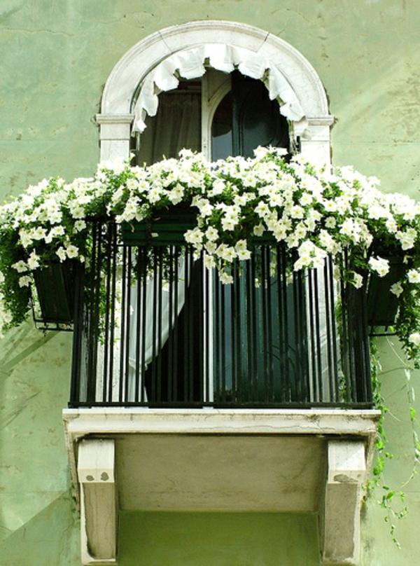 balkon pflanzen design garten gestalten weiß blumen
