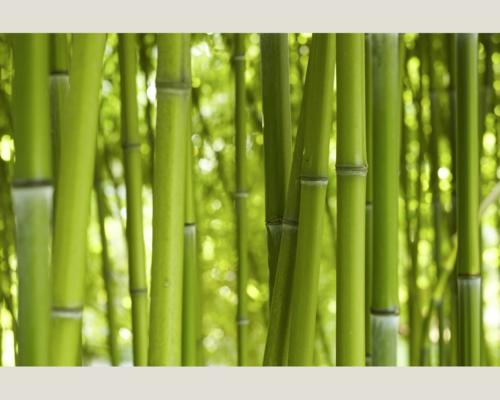 bambus pflanzen sichtschutz balkon innenr ume und m bel. Black Bedroom Furniture Sets. Home Design Ideas