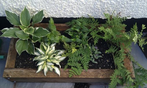 blumenkasten pflanzen außenbereich