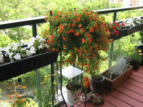 coole balkon bepflanzungsideen kasten blüten orange