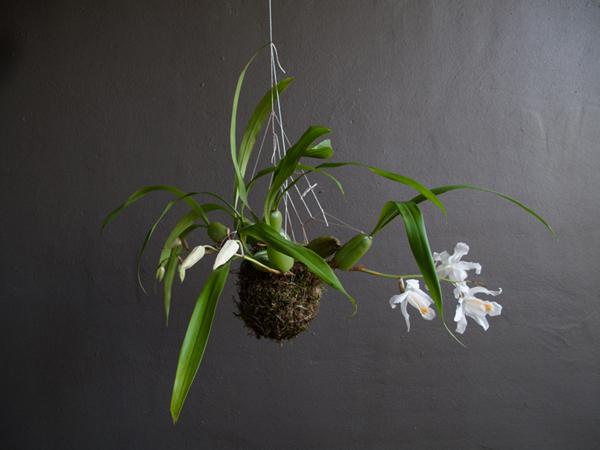 coole gartengestaltung fedor van der valks hängend pflanze
