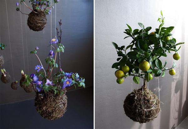 Coole Zimmerpflanzen coole gartengestaltung für innenräume fedor der valk