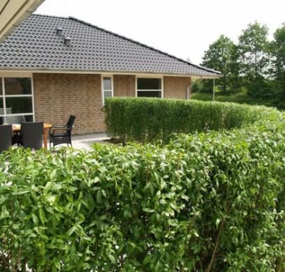 Hecke Pflanzen Stilvoller Lebendiger Zaun