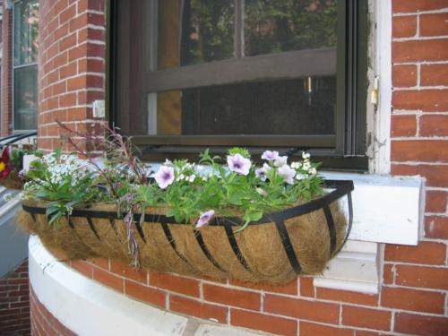 Fensterbank Holz Befestigen ~ Blumenkästen auf der Fensterbank draußen – sichere und schöne