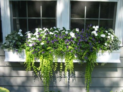 fensterbank draußen blumentopf weiß petunien lila