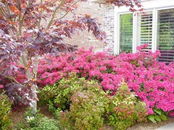 frühlingsstimmung im garten rosa blüten hinterhof