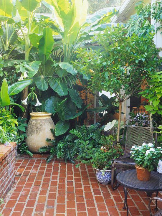 garten klein akzente deko elemente blumen tropenpflanzen
