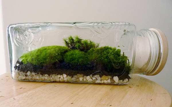 designer idee gartengestaltung terrarium bonsai baum moos