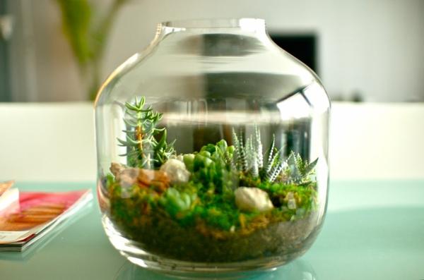 Designer Idee Originelles Terrarium Fur Ihre Bonsai Baume