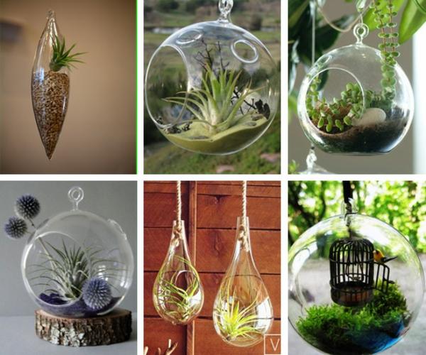 gartengestaltung terrarium bonsai baum originell arten