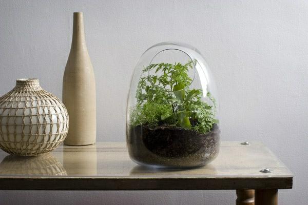 designer idee gartengestaltung terrarium bonsai baum originell deko