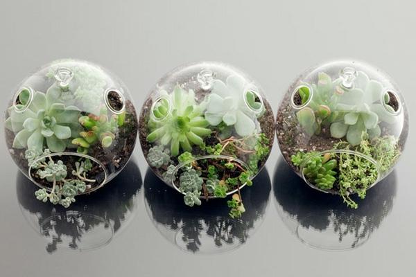designer idee gartengestaltung terrarium bonsai baum originell sekkulenten
